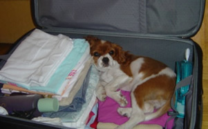 chien_valise